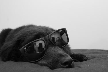 Cool dog :)