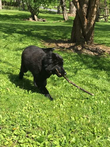 We buy her all these toys...and she likes sticks better!!