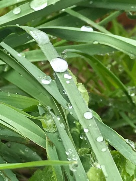 Water droplets :)